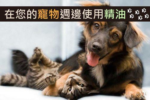 寵物可以用精油嗎