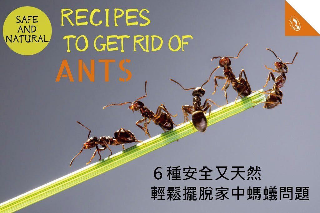 用精油驅逐螞蟻