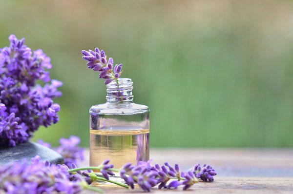purple lavender  flower in a bottle of essential oil 精油使用方法